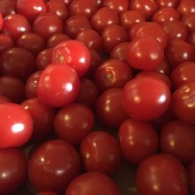 Cherrytomaten los