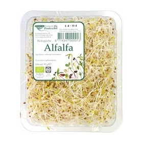 Kiemen alfalfa